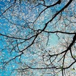 17 июня – 15 августа. «Открытый цвет Кристофера Баркетта»