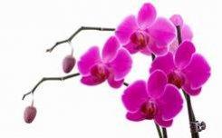 24 декабря  — 18 марта 2012. III Зимний фестиваль орхидей.