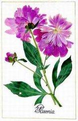 2 декабря  — 29 января 2012 года. Цветы родятся на бумаге.