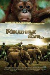С 8 сентября  — документальный фильм «Рожденные на воле» в 3D и  исключительно в залах IMAX