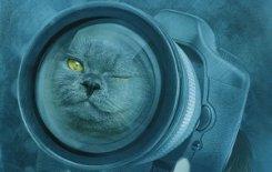 Котов обижать не рекомендуется. Елена Михалкова