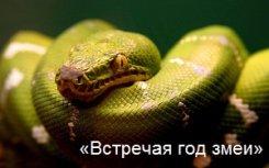 18 декабря — 10 февраля. «Встречая год змеи»