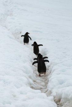 14 — 23 декабря. Фотовыставка «Приближение к Антарктиде»