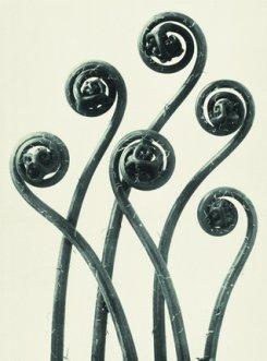 14 февраля-17 марта. Карл Блосфельдт и Эккехард Велькенс «Диалоги о природе»