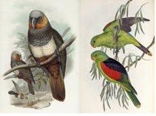 1 октября — 1 декабря. «Попугаи»
