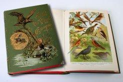 22 октября — 15 декабря. «Птицы на книжных страницах...»