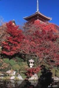Где искать лучшие красные листья в Японии
