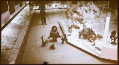В Дарвиновском музее дикие животные вышли из витрин к посетителям