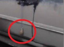 К машине гендиректора «Росгосцирка» привязали гранату