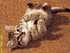 Звезды, которые держат дома кошек