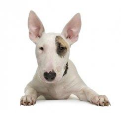 19 июля — 21 сентября. Собака для джентльмена