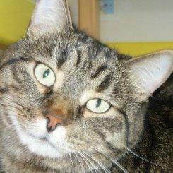 Каждый четвертый британский кот есть в соцсетях