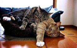 Ученые создали музыку для кошачьей релаксации.