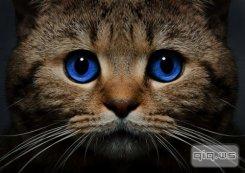 Кошки способны предсказывать будущее