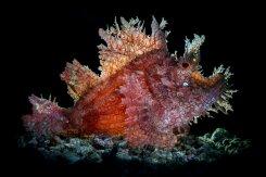 IV Фестиваль подводной фотографии «Дикий подводный мир»