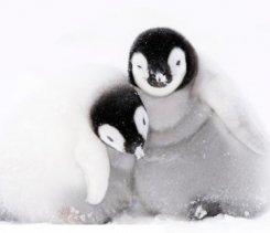 День пингвина