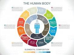 Что есть в твоем теле